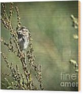 Sparrow In The Weeds Wood Print