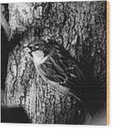 Sparrow On A Tree Wood Print
