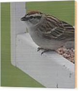 Sparrow On Feeder Wood Print