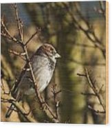 Sparrow Wood Print by Rebecca Cozart