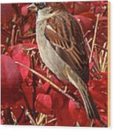 Sparrow Wood Print by Rona Black