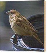 Sparrow Sentry Wood Print