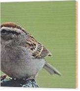 Sparrow Snack Wood Print