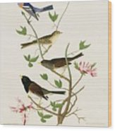 Sparrows And Bunting Wood Print