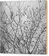 Sparrows Wood Print