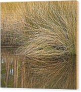 Spartina Grass  Wood Print