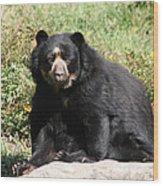 Speckled Bear Wood Print