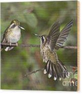 Speckled Hummingbirds Wood Print