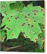 Speckled Leaves Wood Print