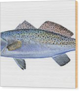 Speckled Trout Wood Print by Carey Chen