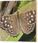 Speckled Wood Butterfly On A Leaf Wood Print
