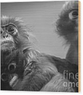 Spectacled Langur Family Wood Print