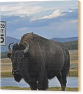 Speedy Bison In Yellowstone National Park Wood Print