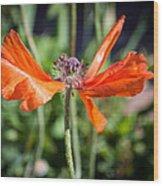 Spent Poppy Wood Print