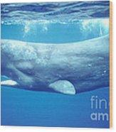 Sperm Whale Wood Print