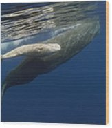 Sperm Whale Mother And Albino Baby Wood Print