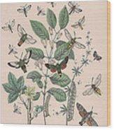 Sphingide - Thrididae - Seslidae Wood Print