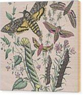 Sphingide Wood Print
