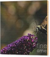 Sphinx Moth On Butterfly Bush Wood Print