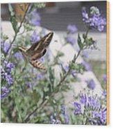 Sphinx Moth Wood Print