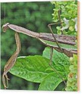 Spice Stalker Wood Print
