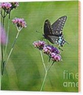 Spicebush Swallowtail Butterfly In Garden Wood Print