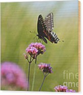 Spicebush Swallowtail Butterfly In Meadow Wood Print