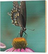 Spicebush Swallowtail Butterfly - Papilio Troilus Wood Print