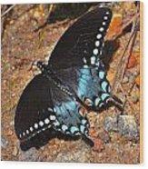 Spicebush Swallowtail Butterfly Wood Print