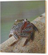 Spider Crab Wood Print