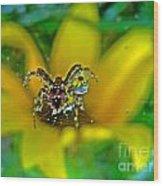 Spider Dew Flower Reflect Wood Print
