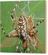 Spider Eating Moth Wood Print
