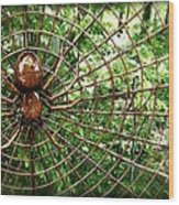 Spider In Its Web Wood Print