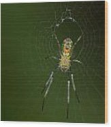 Spider In Mexico Wood Print