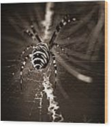 Spider In Waiting Wood Print
