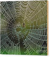 Spider In Web 3 Wood Print