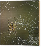 Spider In Web 5 Wood Print