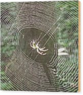 Spider Light Wood Print