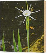 Spider Lily Wildflower Wood Print