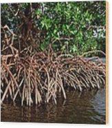 Spider Mangroves Oro Bay Wood Print