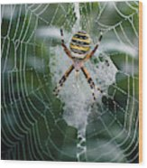 Spider On Its Web Wood Print