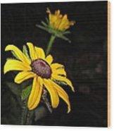 Spider On Rudbeckia Wood Print