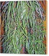Spider Plant Wood Print