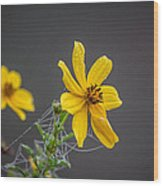 Spider Web On The Flower  Wood Print