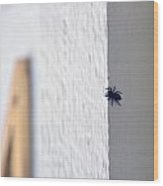 Spider Whats Over There Wood Print