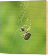 Spider Wrapping Its Food Wood Print