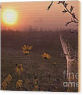 Spiderweb And Wildflowers Lit By Morning Sunrise Wood Print