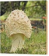 Spiked Mushrooms Wood Print