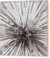 Spikes And Ice Wood Print