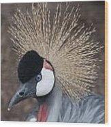 Spikey Feathers-closeup Wood Print